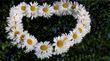 8 Июля-День Святых Петра и Февронии. День  семьи, любви и верности.