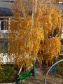 осень в моём дворе
