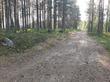 Шагаю по лесным дорожкам...