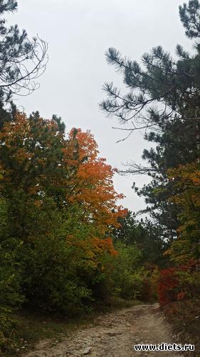 87 фото: Осень 21