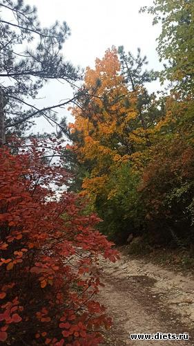 45 фото: Осень 21