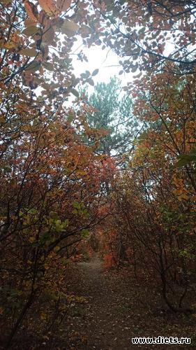 46 фото: Осень 21