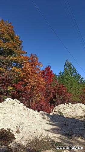 95 фото: Осень 21