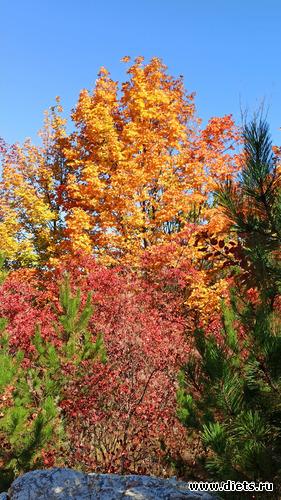 54 фото: Осень 21