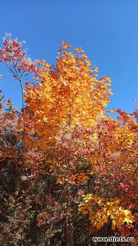 99 фото: Осень 21