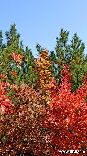 56 фото: Осень 21