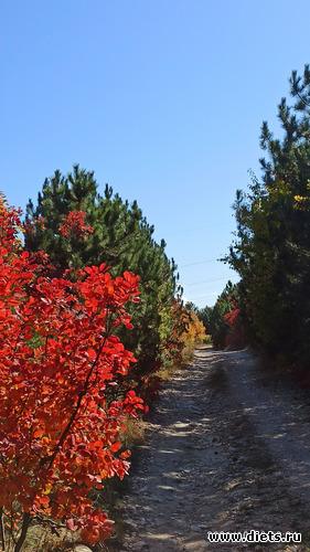 57 фото: Осень 21