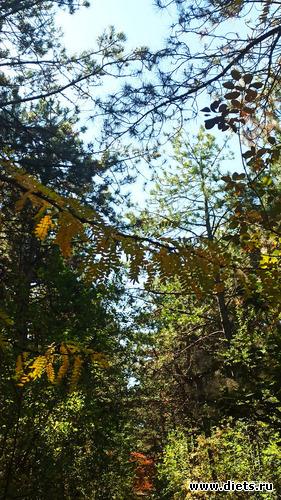 58 фото: Осень 21