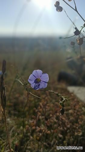 105 фото: Осень 21
